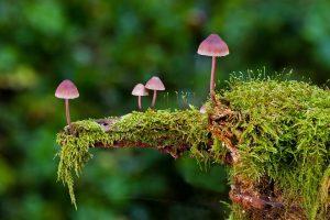 Unsere Natur im Herbst - Umweltgruppe Agenda 21 @ Bürgertreff Thingers | Kempten (Allgäu) | Bayern | Deutschland